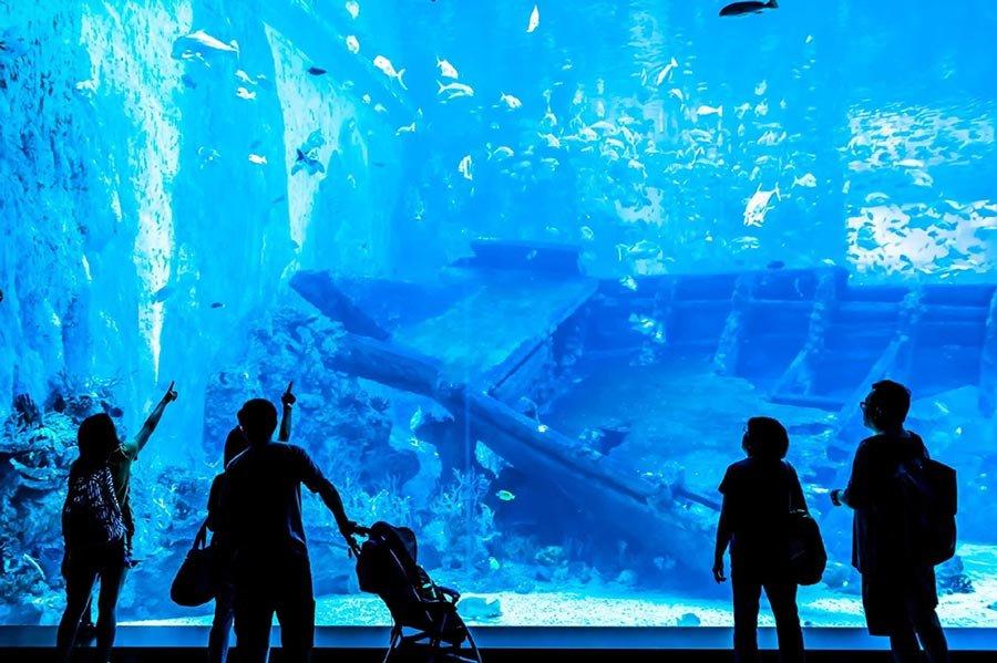 Tham quan thủy cung Sea Aquarium Singapore