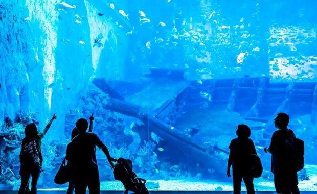 Bước vào lòng đại dương dễ dàng khi đến với thủy cung Sea Aquarium Singapore