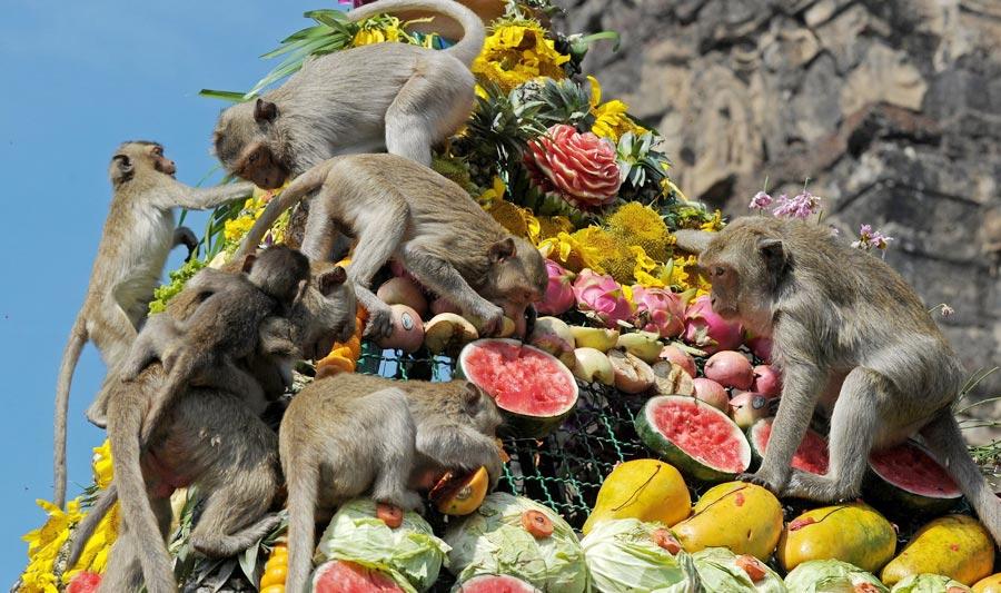 Lễ hội Buffet khỉ tại Lopburi Thái Lan