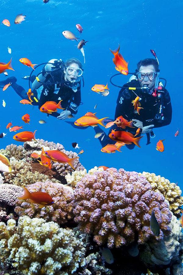 Hoạt động thú vị ở Thái Lan: Lặn Biển