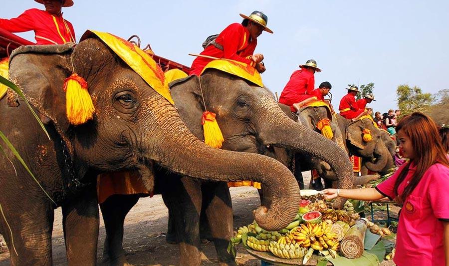 Lễ hội voi Surin Thái Lan