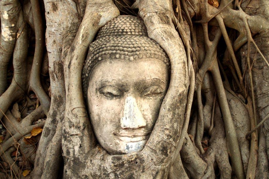 Mặt Phật trong rễ cây ở Ayutthaya