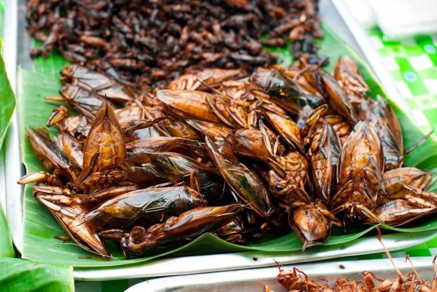 Đặc sản Campuchia Món ăn từ côn trùng